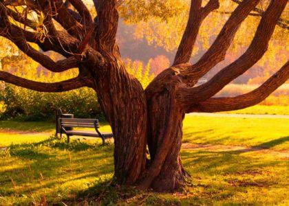 Работа с деревьями осенью