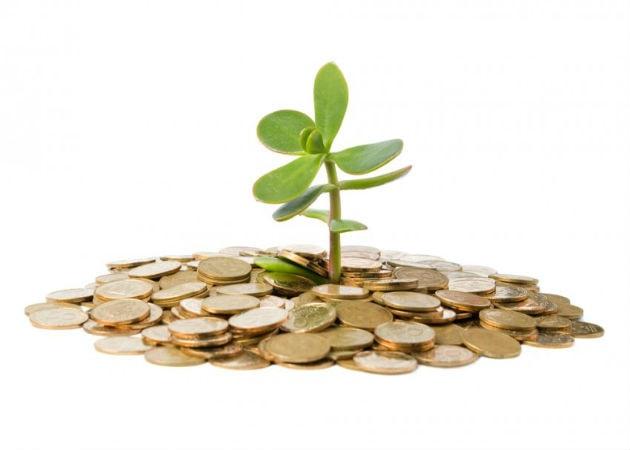 Денежное дерево: как посадить, чтобы разбогатеть в 2017 году