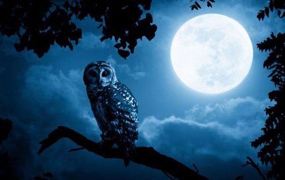 Пять духов животных на Самайн